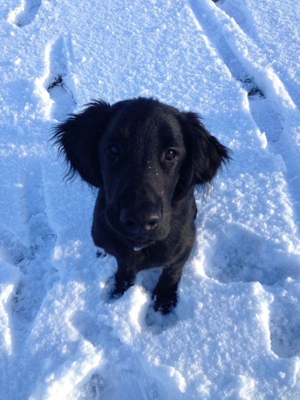 'Bailey' - he loves snow.