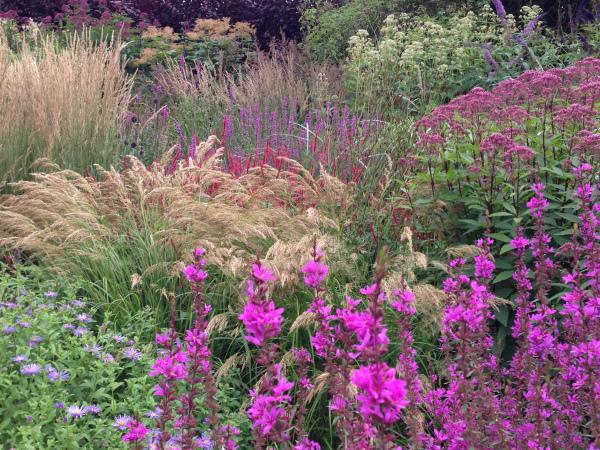 Late season colour at Cambo Garden
