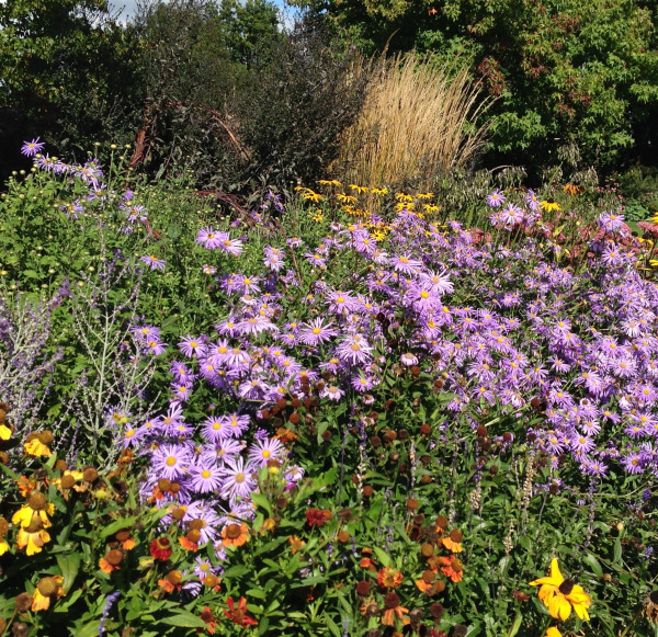 Late summer flowers at Sussex Prairies Garden