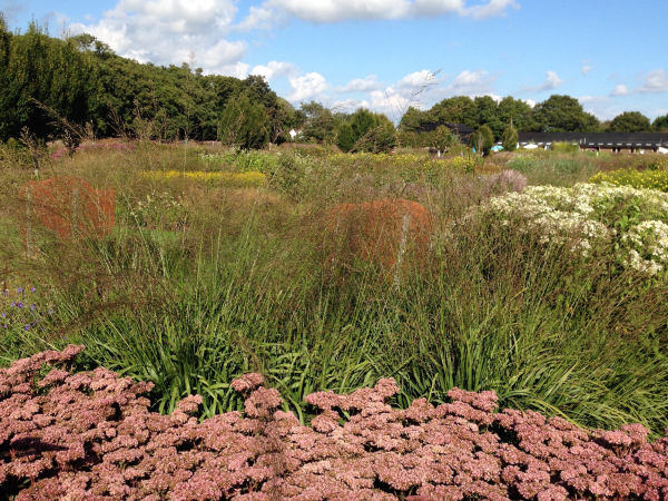 Sedums and grasses