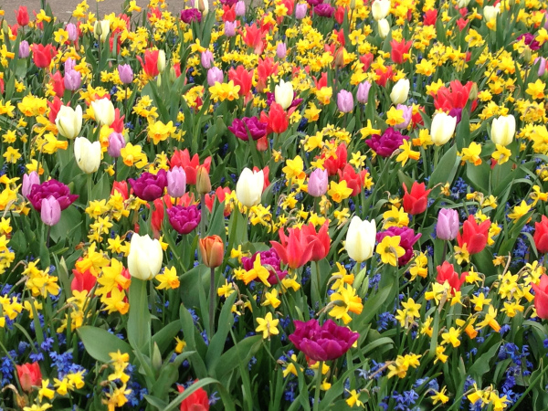 a mix of colourful spring bulb flowers