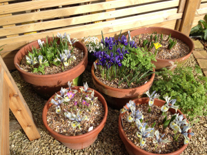 small containers with spring colour
