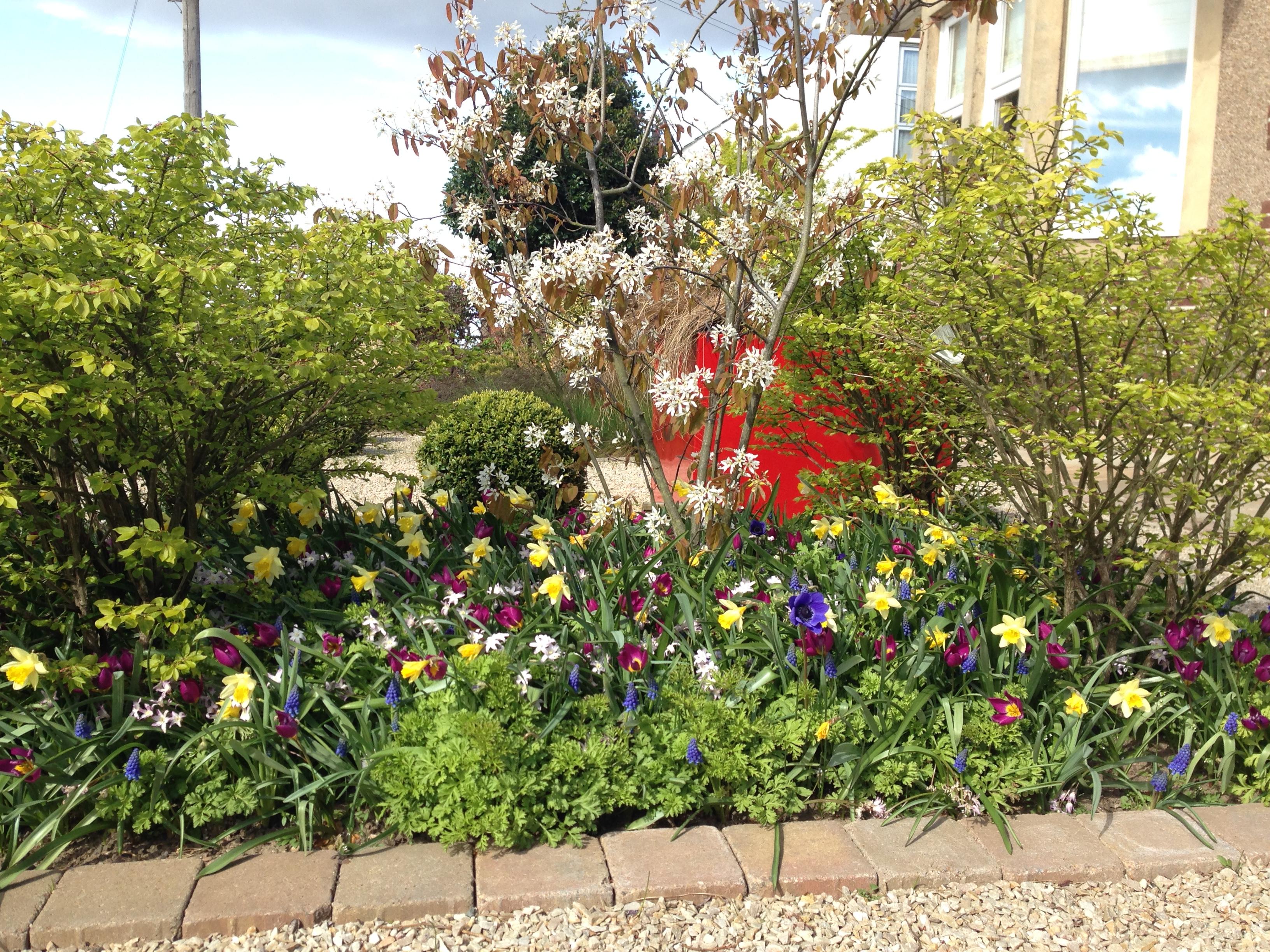 Polley Garden Design - colourful mixed spring bulb planting
