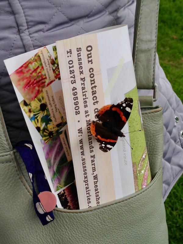 Butterflies at Sussex Prairie Garden