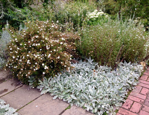 planting combination in The White Garden