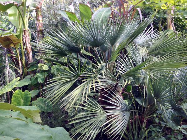 exotic garden at gt dexter