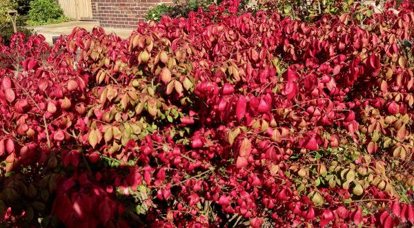 autumn colour by Polley Garden Design