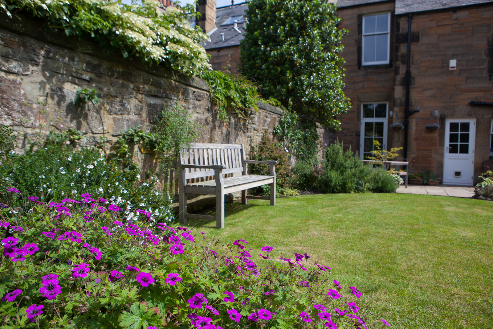 Geraniums and a sunny bench in an Edinburgh garden