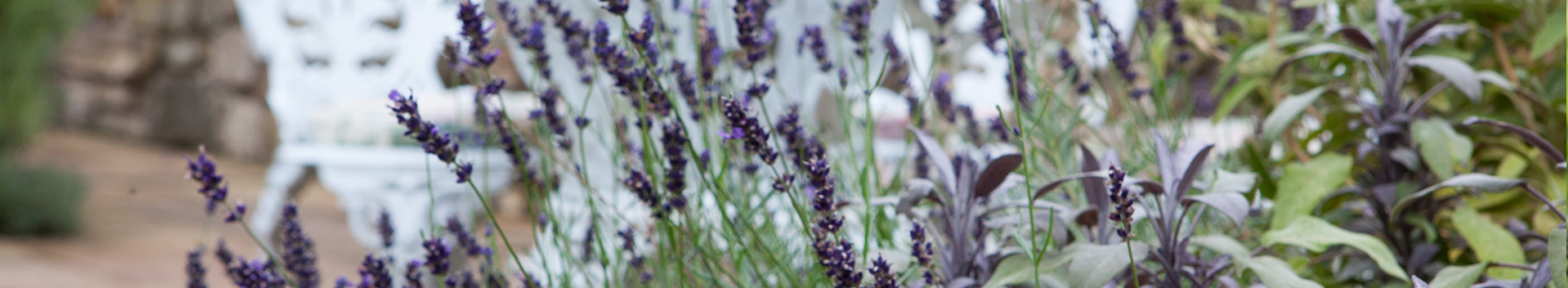 Polley Garden Design - lavendar