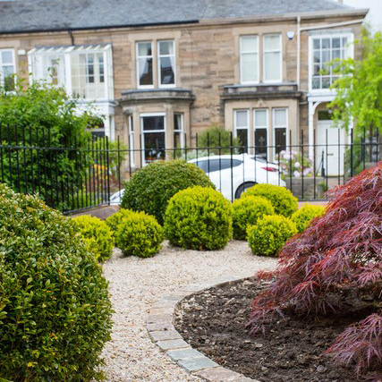 Garden design - a redeveloped small front garden with box balls and acer