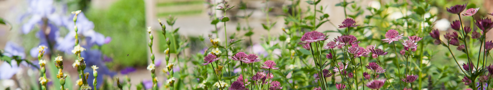 About Polley Garden Design - Mixed planting with Astrantia