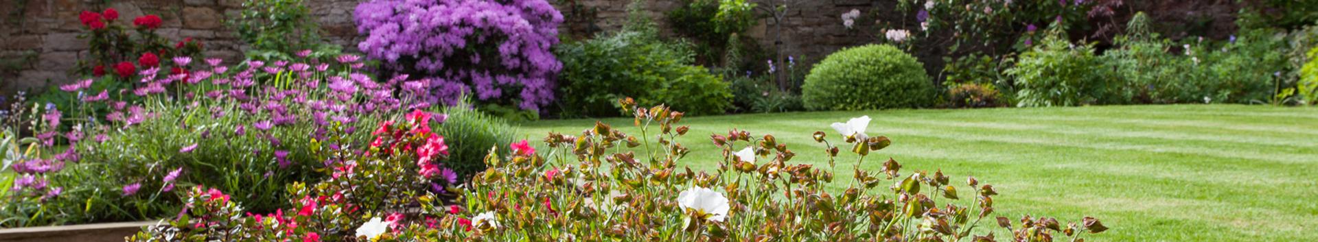A Sunny Walled Garden