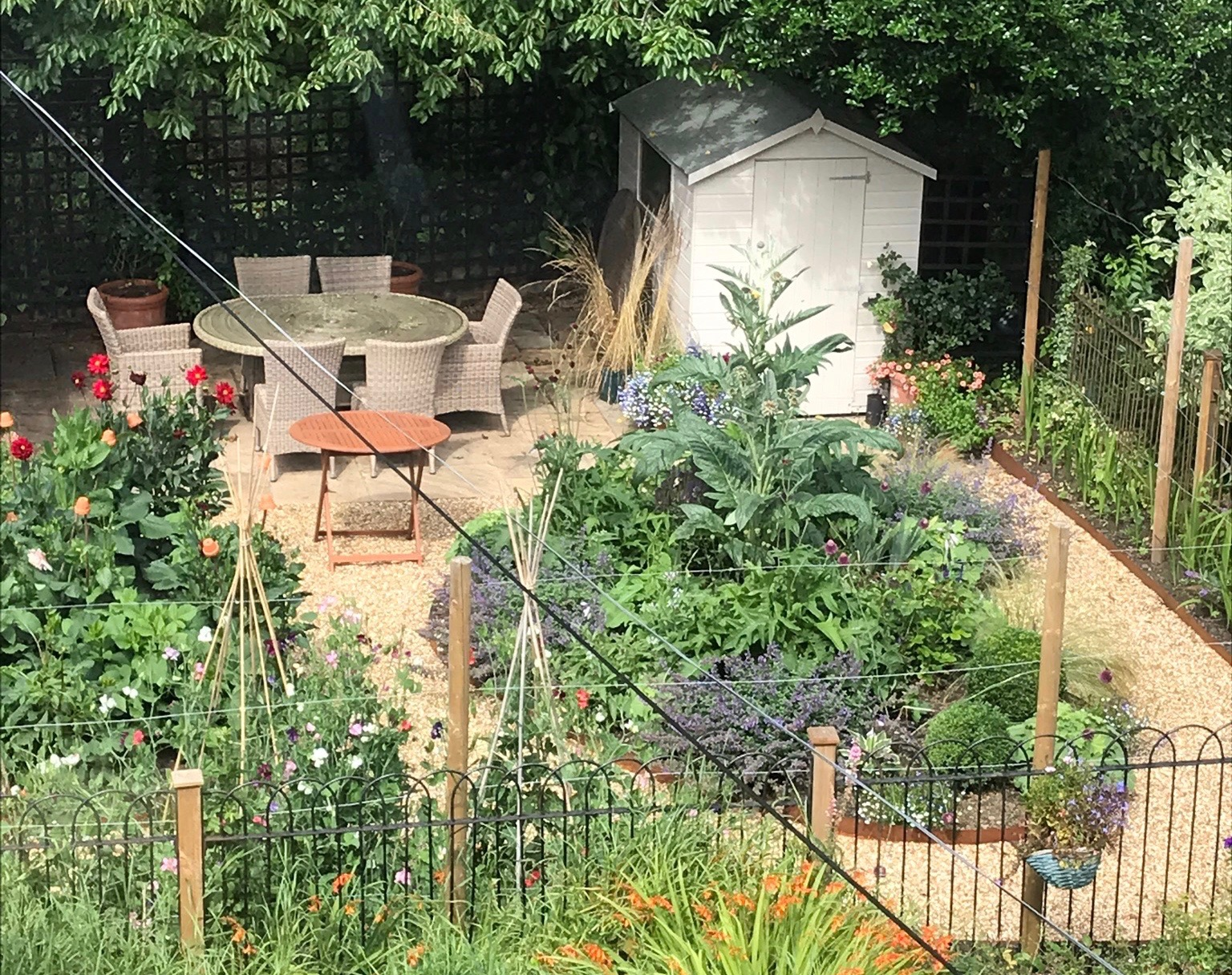 Use trained fruit to give privacy on the boundaries of a garden
